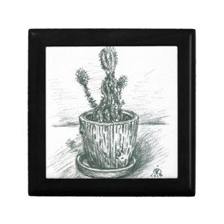 cactus, flowers, nature , plants , pot, magic gift box