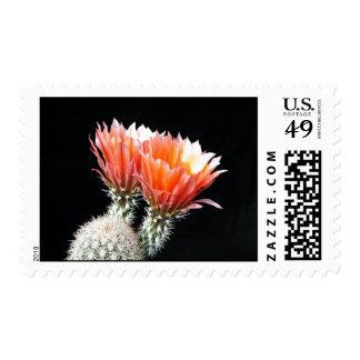 Cactus Flowers Postage Stamp