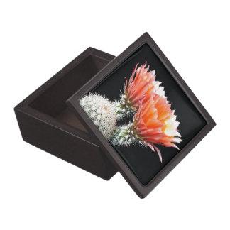 Cactus Flowers Premium Gift Box