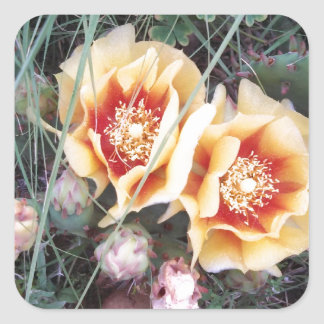 Cactus Flowers Stickers
