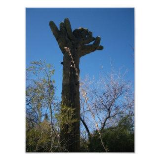 Cactus Fotografía