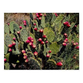 Cactus fructífero del higo chumbo, desierto de Son Postales