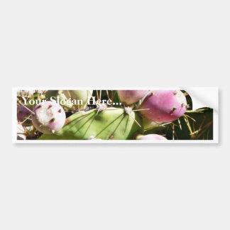 Cactus Fruits Bumper Sticker