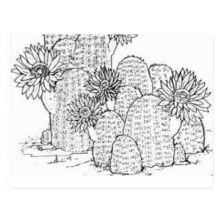 cactus garden adult coloring postcard gift