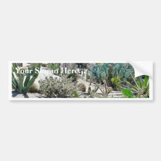 Cactus Garden At Balboa Park Car Bumper Sticker