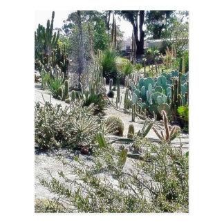 Cactus Garden At Balboa Park Postcard