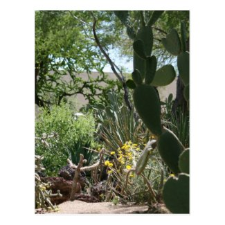 Cactus Garden at Grand Canyon Postcard