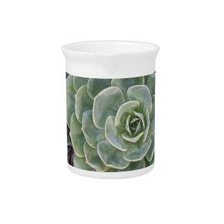 Cactus Garden pitcher