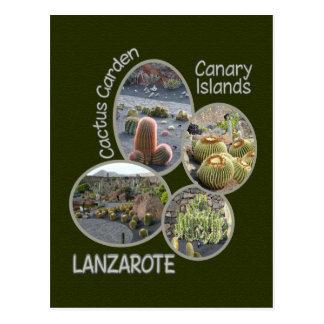 Cactus Garden postcard