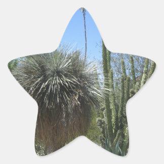 Cactus Garden Star Sticker