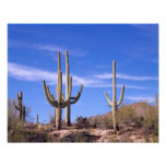 Cactus gigante armado multi del Saguaro, Saguaro Fotografía