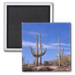 Cactus gigante armado multi del Saguaro, Saguaro Imán Cuadrado