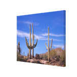 Cactus gigante armado multi del Saguaro, Saguaro Impresion De Lienzo