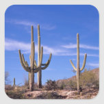 Cactus gigante armado multi del Saguaro, Saguaro Pegatina Cuadrada
