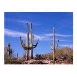 Cactus gigante armado multi del Saguaro, Saguaro Postal
