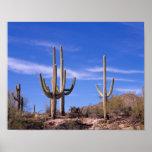 Cactus gigante armado multi del Saguaro, Saguaro Póster