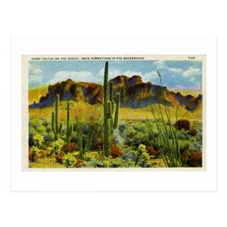 Cactus gigante en paisaje de la postal del vintage