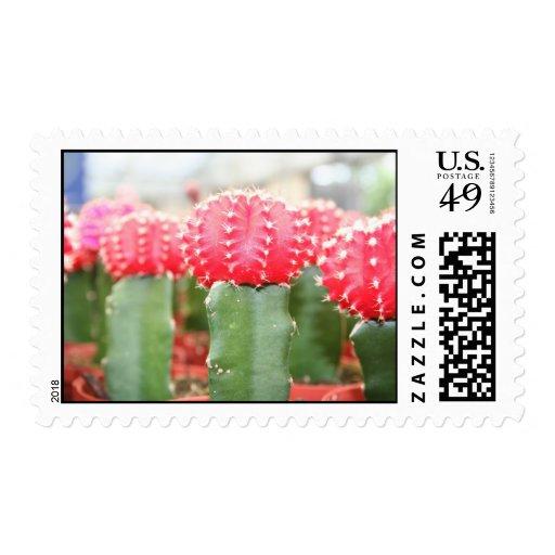 cactus girls postage