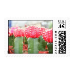 cactus girls stamps