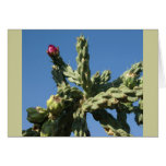 Cactus in Bloom, Mexico Greeting Card