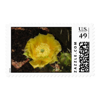 Cactus in Bloom Stamp