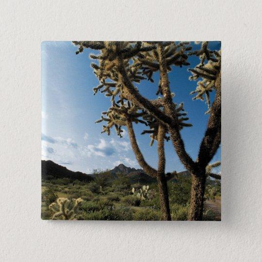 Cactus in Saguaro National Park , Arizona Button