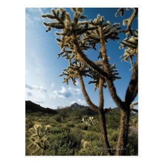 Cactus in Saguaro National Park , Arizona Postcards