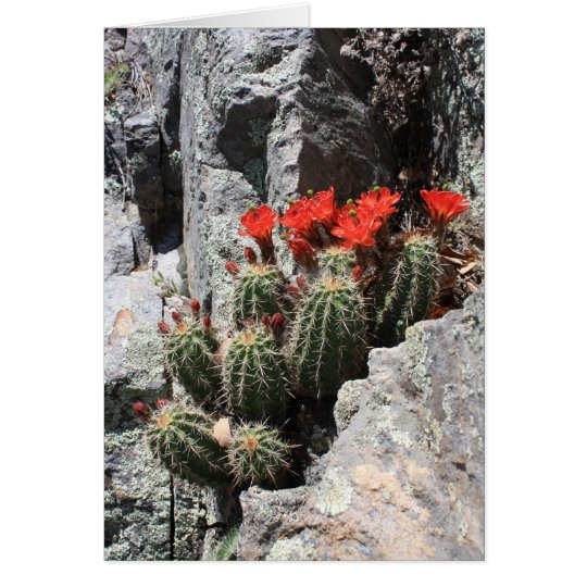 Cactus in the Rock Card