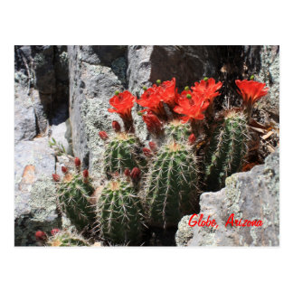 Cactus in the Rock Post Cards