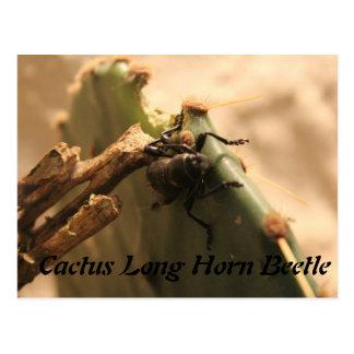 Cactus Long Horn Beetle Postcard