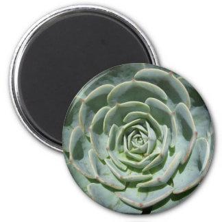 Cactus Refrigerator Magnets