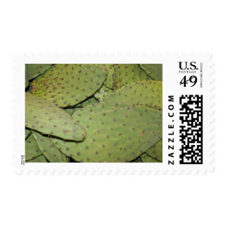 Cactus Mania Food Photo Gear Stamps
