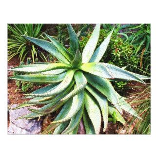 Cactus mediterráneo que crece a lo largo de costa anuncio
