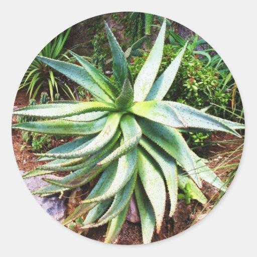 Cactus mediterráneo que crece a lo largo de costa pegatina redonda