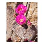 Cactus Membrete A Diseño