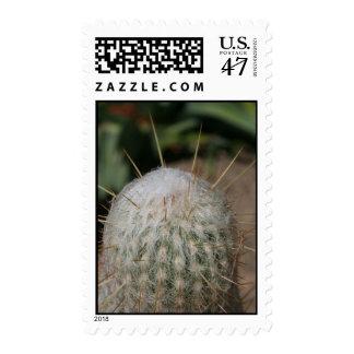 cactus needles postage