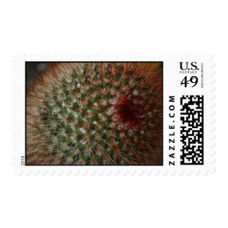 Cactus needles up close US postage stamps