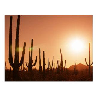 Cactus On Desert Postcard