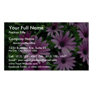 Cactus, Osteospermum Business Card Template