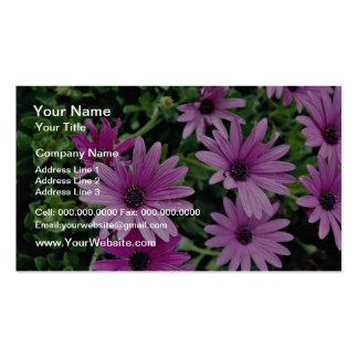 Cactus, Osteospermum  flowers Business Cards