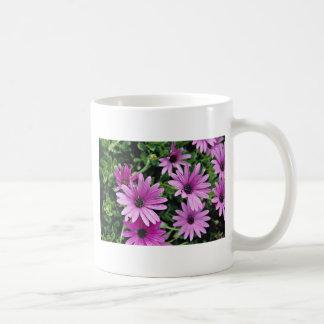 Cactus, Osteospermum  flowers Mug