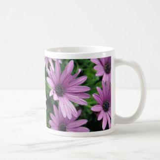 Cactus Osteospermum Tazas De Café