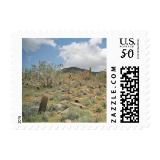 Cactus Pastoral Sonoran Desert Postage Photo Stamp