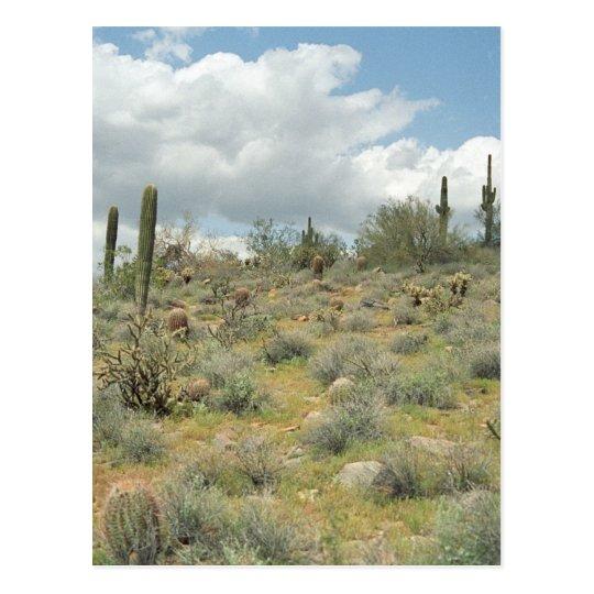 Cactus Pastoral Sweep Desert Photo Postcards