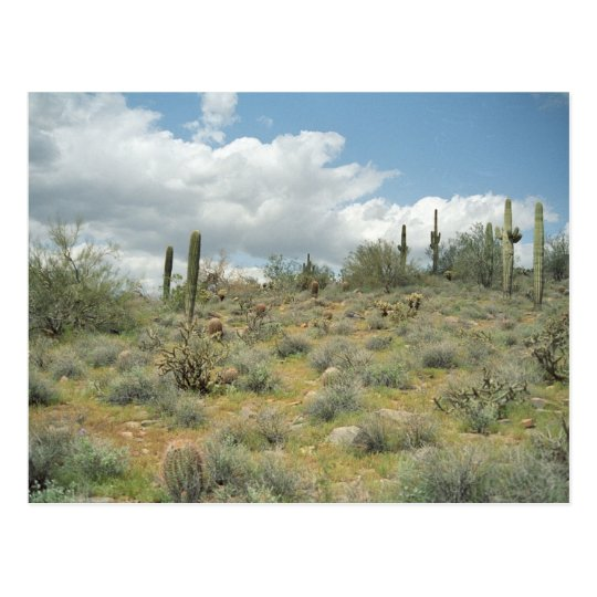 Cactus Pastoral Sweep Desert Photo Postcards