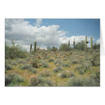 Cactus Pastoral Sweep Greeting Card or Note Card