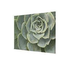Cactus pattern canvas print