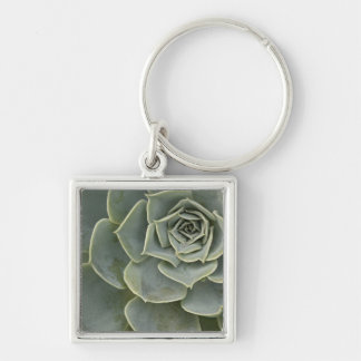 Cactus pattern Silver-Colored square keychain
