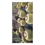 cactus photos picture card