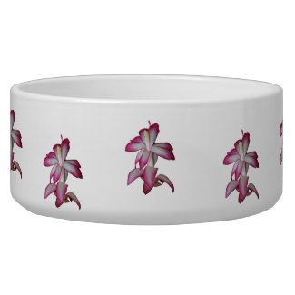 Cactus pink and white flower, succulent bloom petbowl